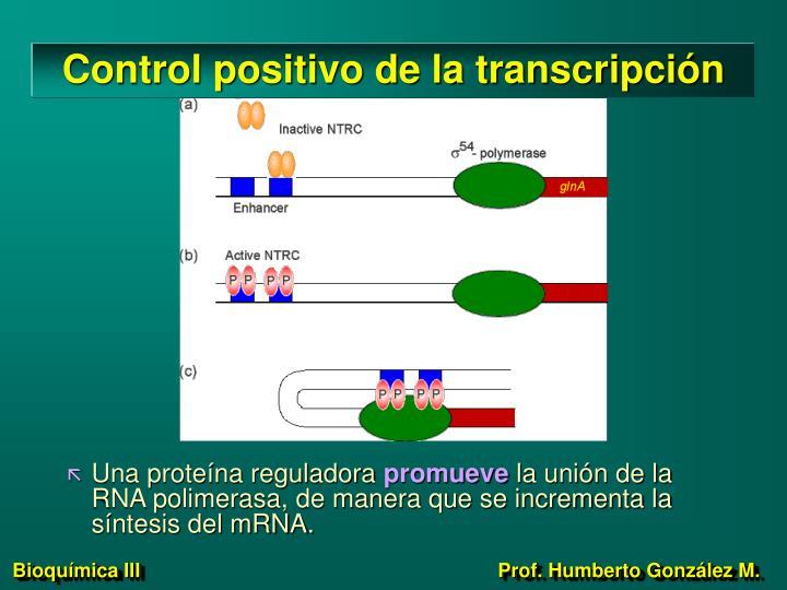 Control positivo de la transcripción