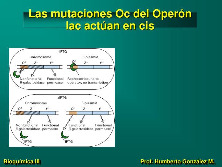 Las mutaciones Oc del Operón lac actúan en cis