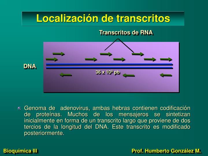 Localización de transcritos