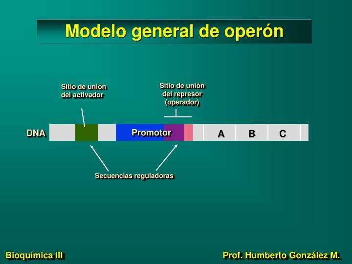 Modelo general de operón