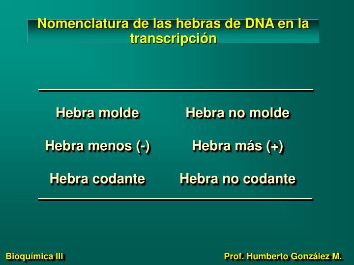 Hebra molde