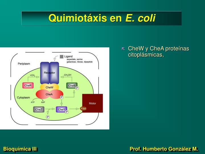 Quimiotáxis en