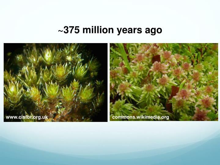 ~375 million years ago