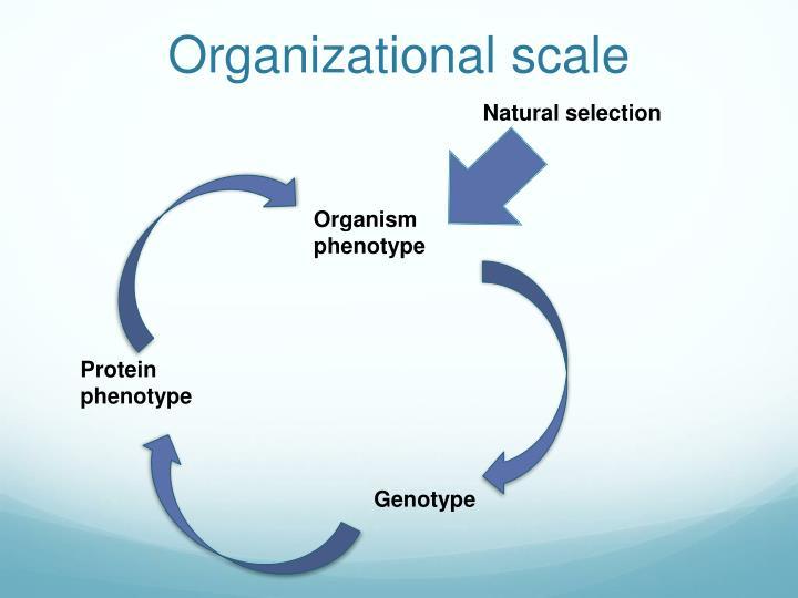 Organizational scale
