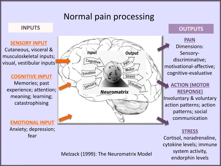 Normal pain processing