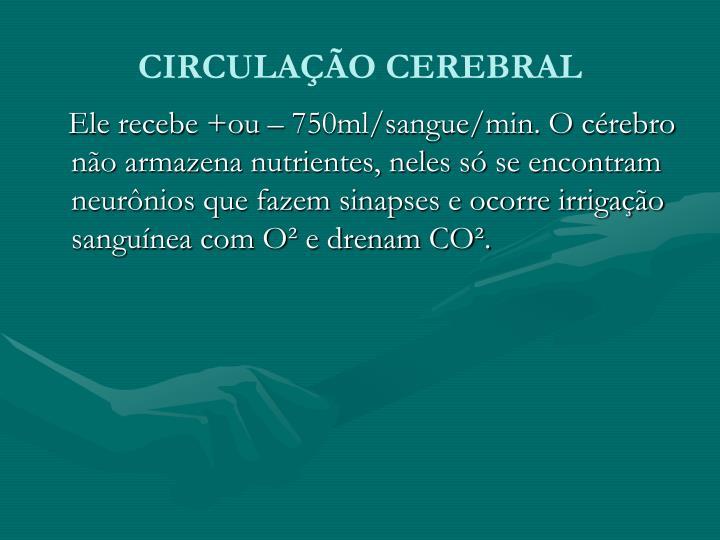 CIRCULAÇÃO CEREBRAL
