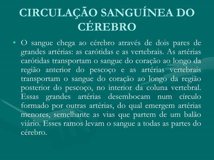 CIRCULAÇÃO SANGUÍNEA DO CÉREBRO