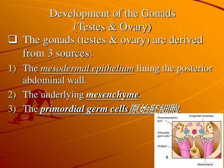 Development of the Gonads