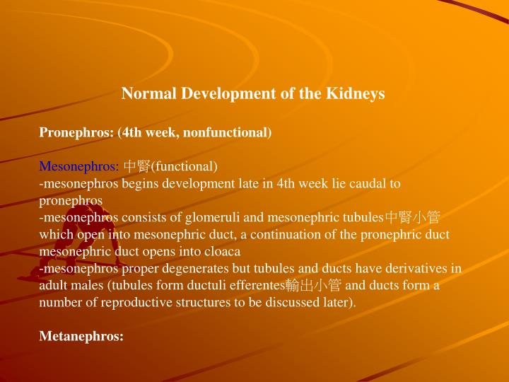 Normal Development of the Kidneys