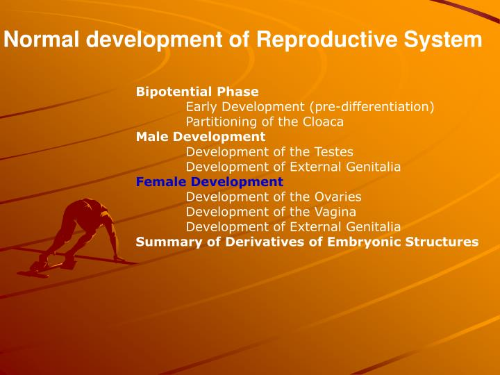 Normal development of Reproductive System