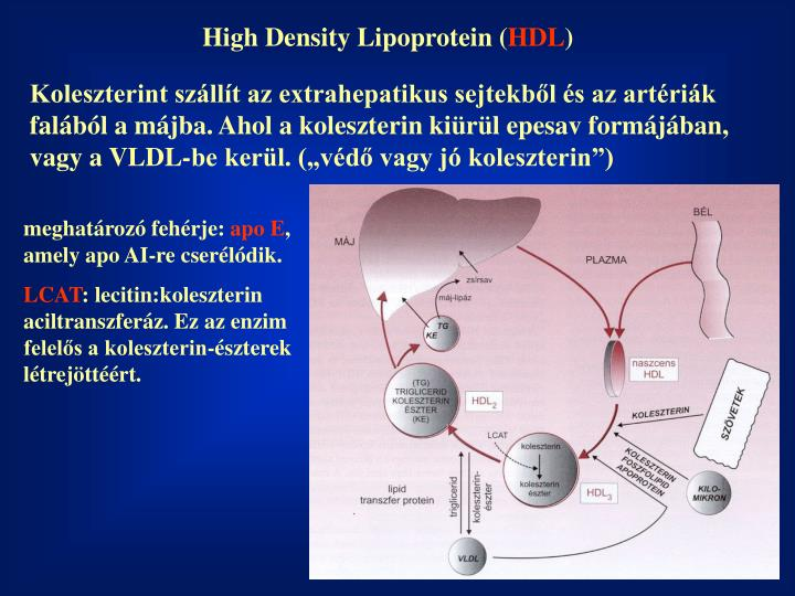 High Density Lipoprotein (