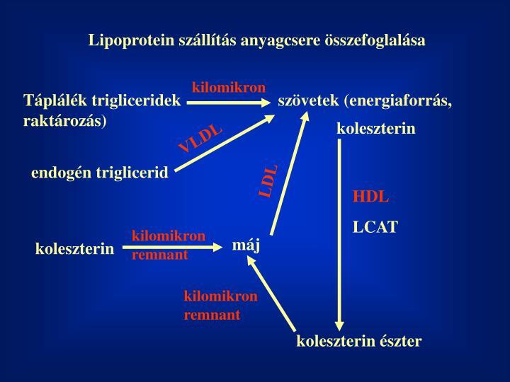 Lipoprotein szállítás anyagcsere összefoglalása