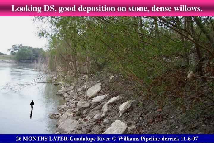 Looking DS, good deposition on stone, dense willows.