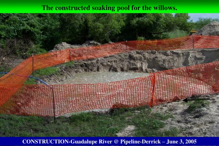 The constructed soaking pool for the willows.