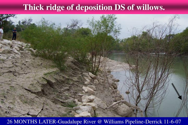 Thick ridge of deposition DS of willows.