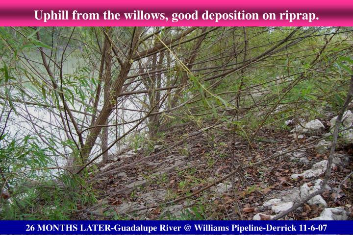 Uphill from the willows, good deposition on riprap.
