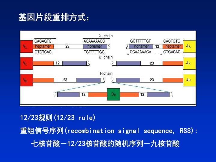 基因片段重排方式