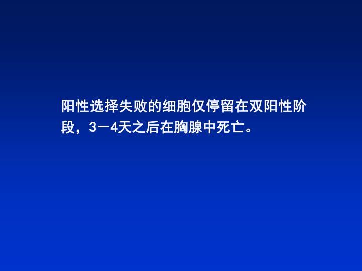阳性选择失败的细胞仅停留在双阳性阶段,3-4天之后在胸腺中死亡。