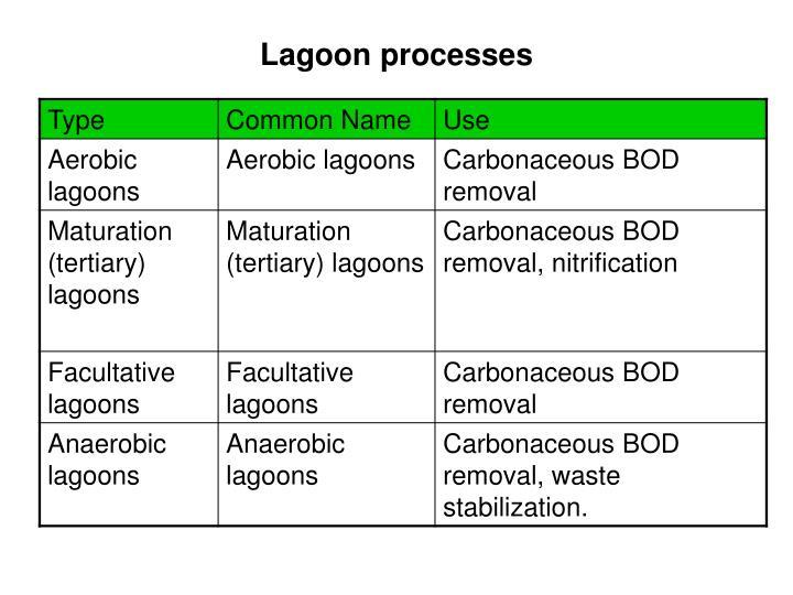 Lagoon processes