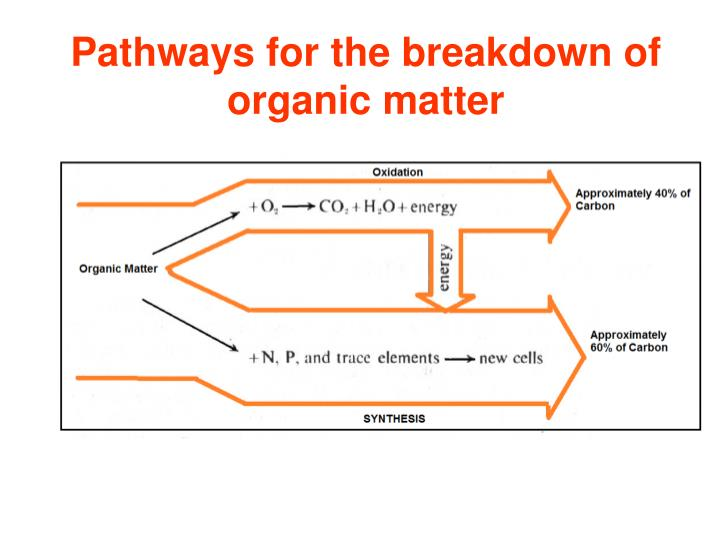 Pathways for the breakdown of organic matter