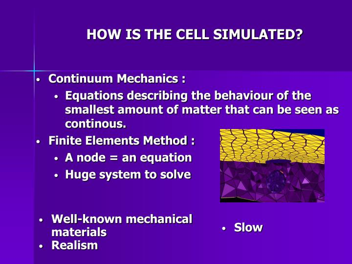 HOW IS THE CELL SIMULATED?
