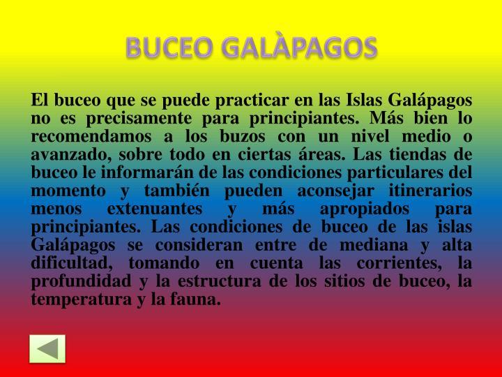 BUCEO GALÀPAGOS