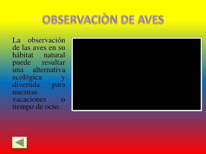 OBSERVACIÒN DE AVES
