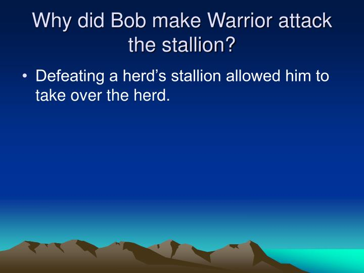 Why did Bob make Warrior attack the stallion?