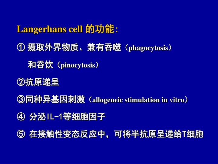 Langerhans cell