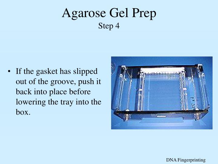 Agarose Gel Prep