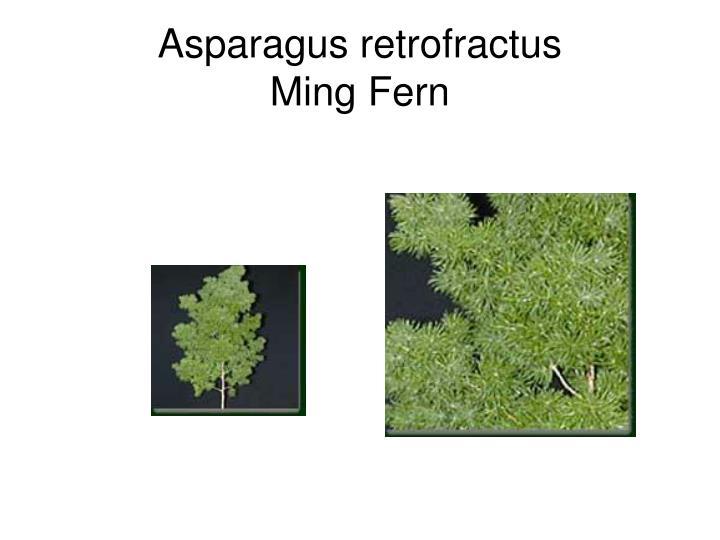 Asparagus retrofractus