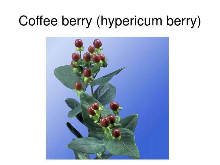 Coffee berry (hypericum berry)