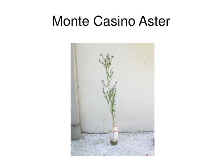 Monte Casino Aster