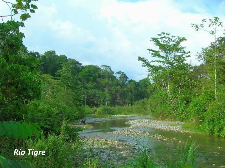 Río Tigre