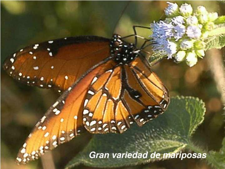Gran variedad de mariposas