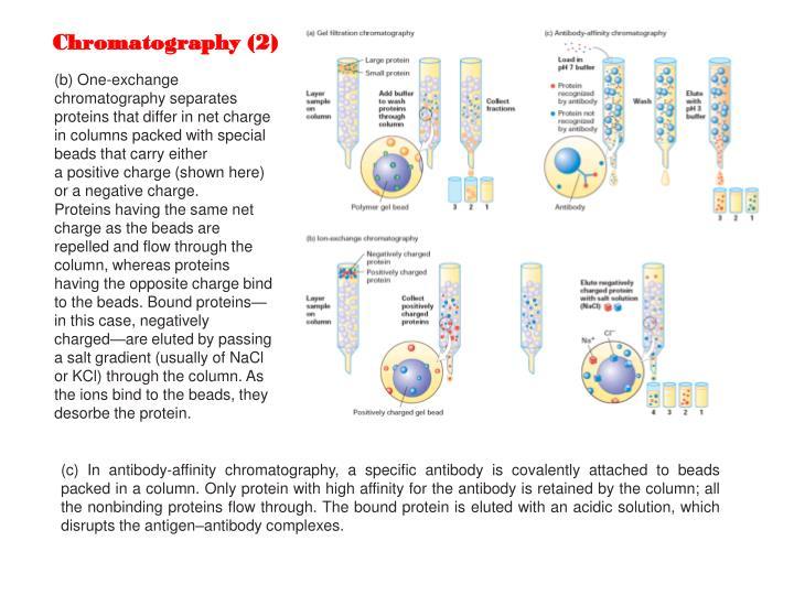 Chromatography (2)