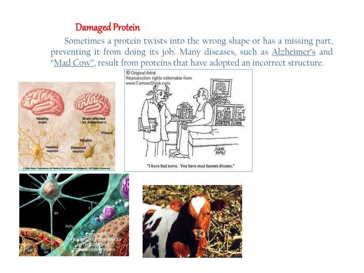 Damaged Protein