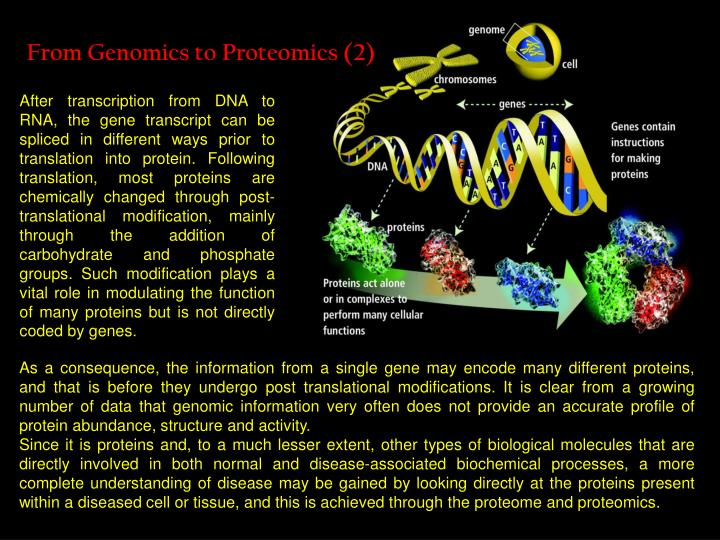 From Genomics to Proteomics (2)