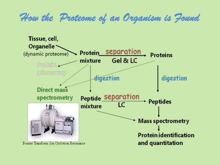 How the  Proteome of an Organism is Found