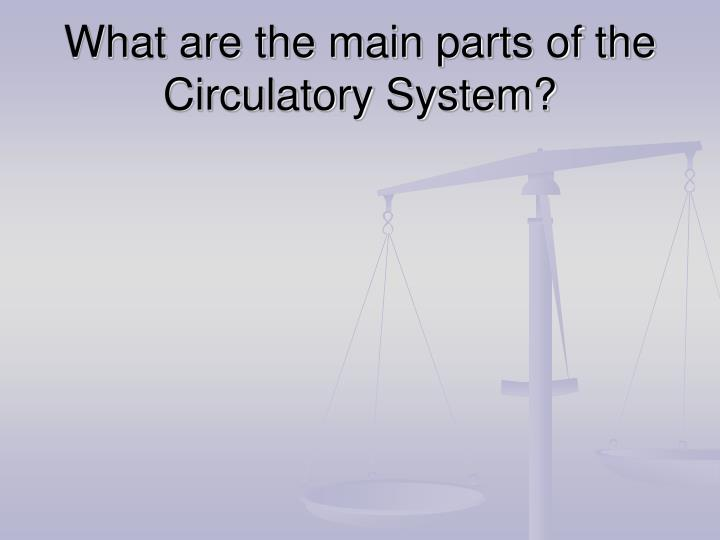 What are the main parts of the circulatory system