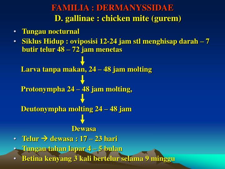 FAMILIA : DERMANYSSIDAE