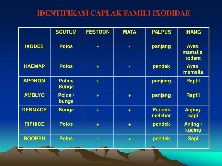 IDENTIFIKASI CAPLAK FAMILI IXODIDAE