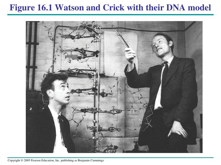 Figure 16.1 Watson and Crick with their DNA model
