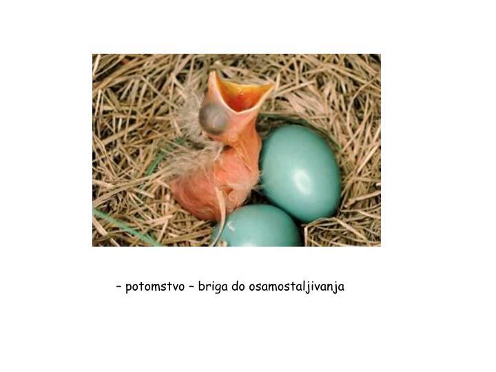 – potomstvo – briga do osamostaljivanja