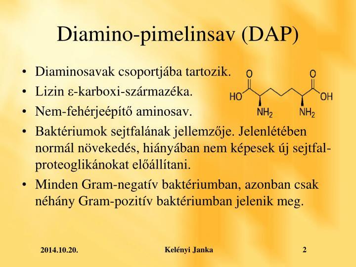Diamino-pimelinsav (DAP)