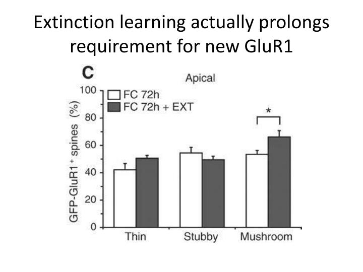 Extinction learning actually prolongs requirement for new GluR1
