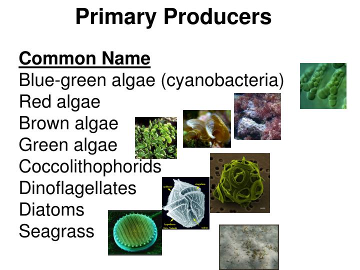 factors affecting the standing biomass of The flow of energy: primary production to higher trophic levels all flesh is grass what factors limit the amount of primary production locally and worldwide while standing crop biomass is the amount of plant matter at a given point in time.
