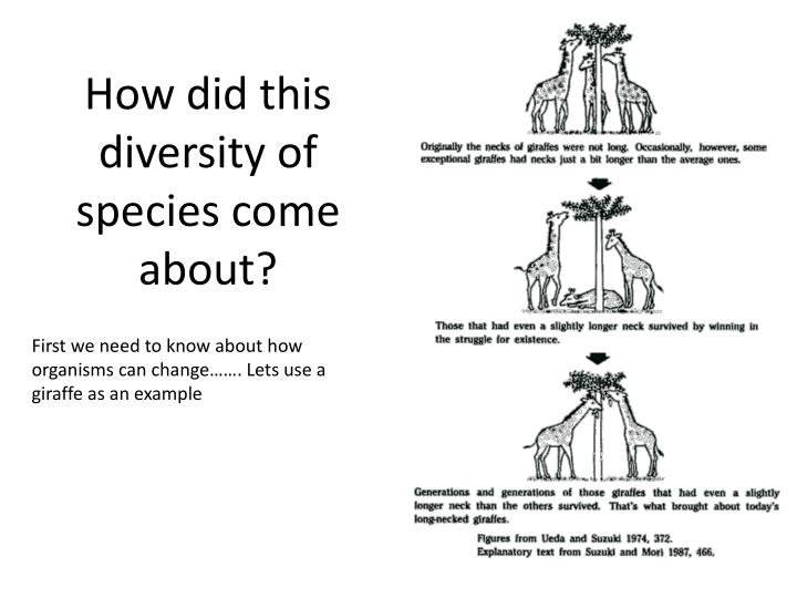 How did this diversity of species come about?