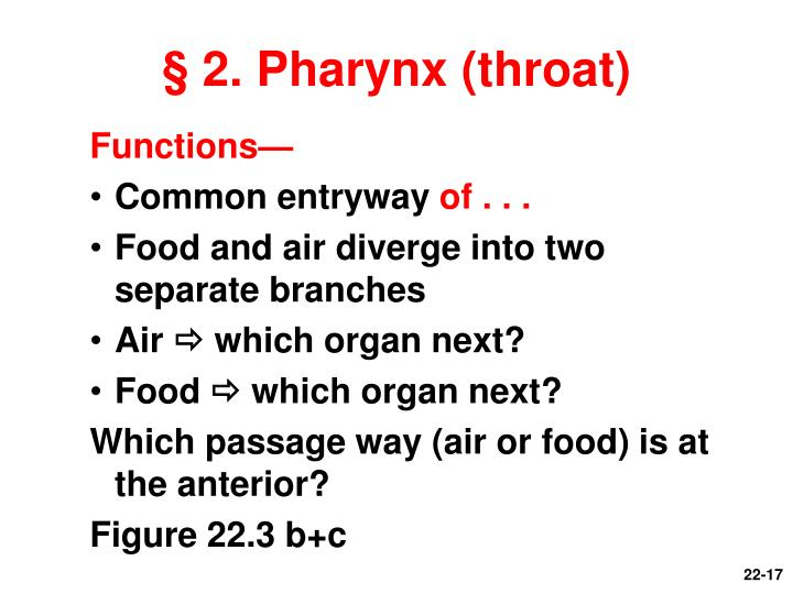 § 2. Pharynx (throat)