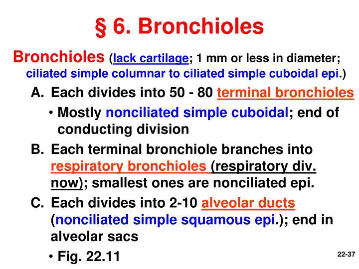 § 6. Bronchioles